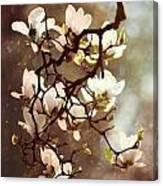White Magnolias Canvas Print