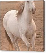 White Mare Approaches Number One Close Up Muted Canvas Print