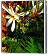 White Maui Flowers Canvas Print