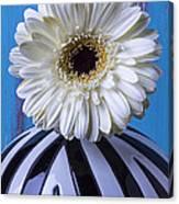 White Mum In Striped Vase Canvas Print