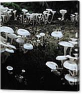 White Mushrooms Amazon Jungle Brazil 1 Canvas Print
