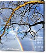 White Oak And Double Rainbow Canvas Print