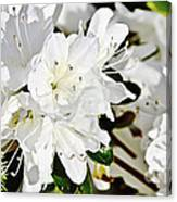 White On White Canvas Print