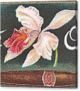 White Orchid Cigar Label Canvas Print
