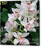 White Orchid In Full Bloom Canvas Print