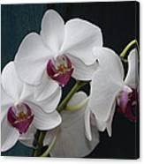 White Orchids Canvas Print