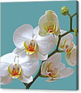 White Orchids On Ocean Blue Canvas Print