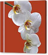 White Orchids On Terracotta Vdertical Canvas Print