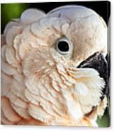 White Parrot Canvas Print