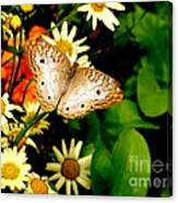 White Peacock Butterfly I I I Canvas Print
