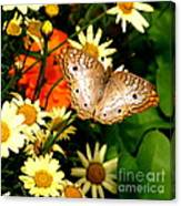 White Peacock Butterfly I V Canvas Print