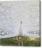 White Peacock - Fountain Of Youth Canvas Print