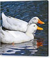 White Pekin Ducks #2 Canvas Print