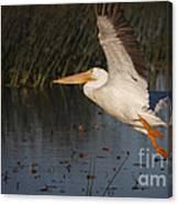 White Pelican 198 Canvas Print