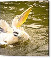 White Pelican Canvas Print