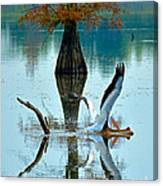 White Pelican Canvas Print