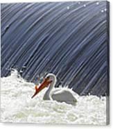 White Pelican Over The Dam Canvas Print