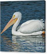 White Pelican Swimming Canvas Print