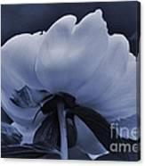 White Peon Canvas Print