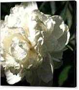 White Peony In Spring Canvas Print