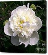 White Peony Watercolor Effect Canvas Print