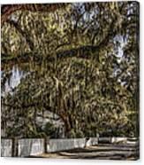 White Picket Fences Canvas Print