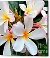 White Plumeria - 2 Canvas Print