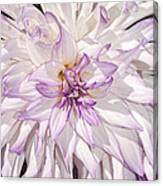 White Purple Dahlia Canvas Print