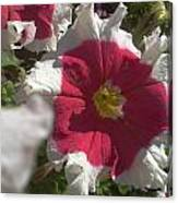 White-red Petunia Canvas Print