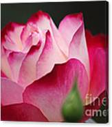 White Red Rose 01 Canvas Print