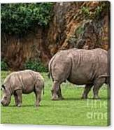 White Rhino 11 Canvas Print