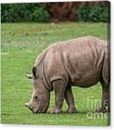 White Rhino 12 Canvas Print