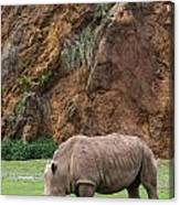 White Rhino 13 Canvas Print