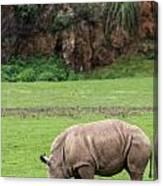 White Rhino 14 Canvas Print
