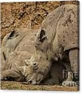 White Rhino 2 Canvas Print