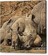 White Rhino 3 Canvas Print