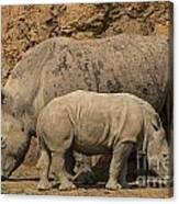 White Rhino 4 Canvas Print
