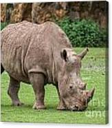 White Rhino 5 Canvas Print