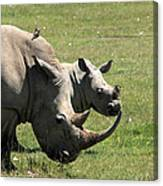 White Rhino Mother And Calf Canvas Print