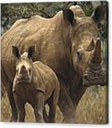 White Rhinoceros And Baby Lewa Kenya Canvas Print