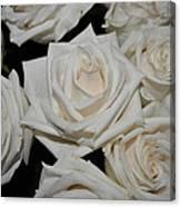 White Rose 1 Canvas Print