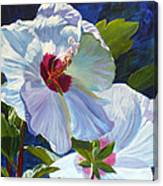 White Rose Of Sharon Canvas Print