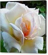 White Rose Oleo Canvas Print