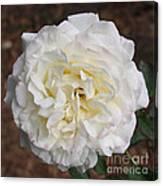 White Rose Square Canvas Print