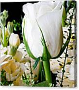 White Roses Close Up Canvas Print