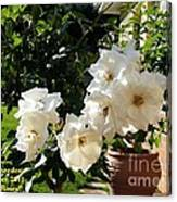 White Roses H A Canvas Print