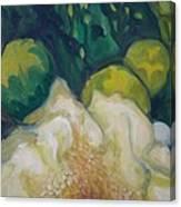 White Saguaro Petals Canvas Print