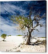 White Sands National Monument #1 Canvas Print
