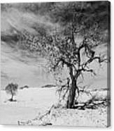 White Sands National Monument 1 Light Mono Canvas Print