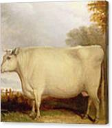 White Short-horned Cow In A Landscape Canvas Print